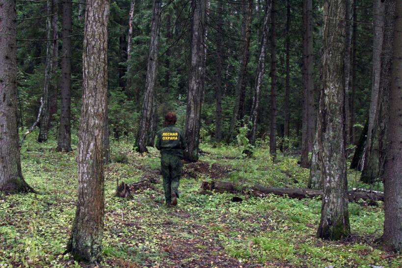 За лесами в Тверской области будут следить специальные патрули