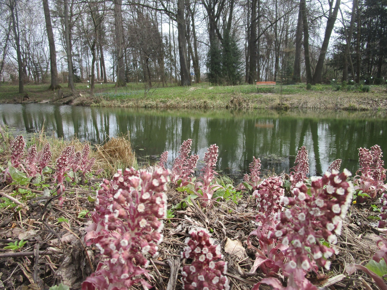 Ботанический сад ТвГУ проводит виртуальные экскурсии