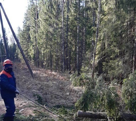 Энергетики устранили последствия сильного ветра в Тверской области