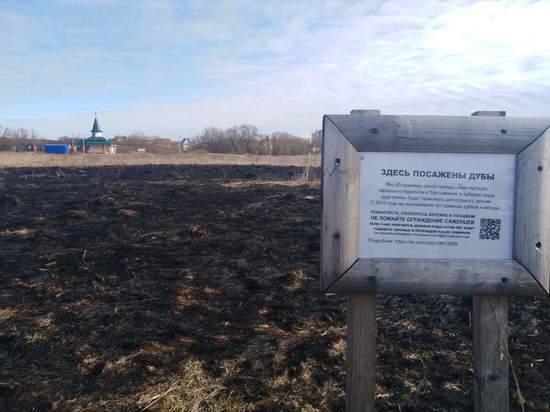 В Тверской области пожар уничтожил поле с молодыми дубами