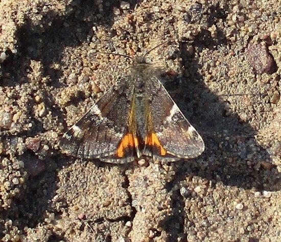 В Тверской области заметили первых бабочек