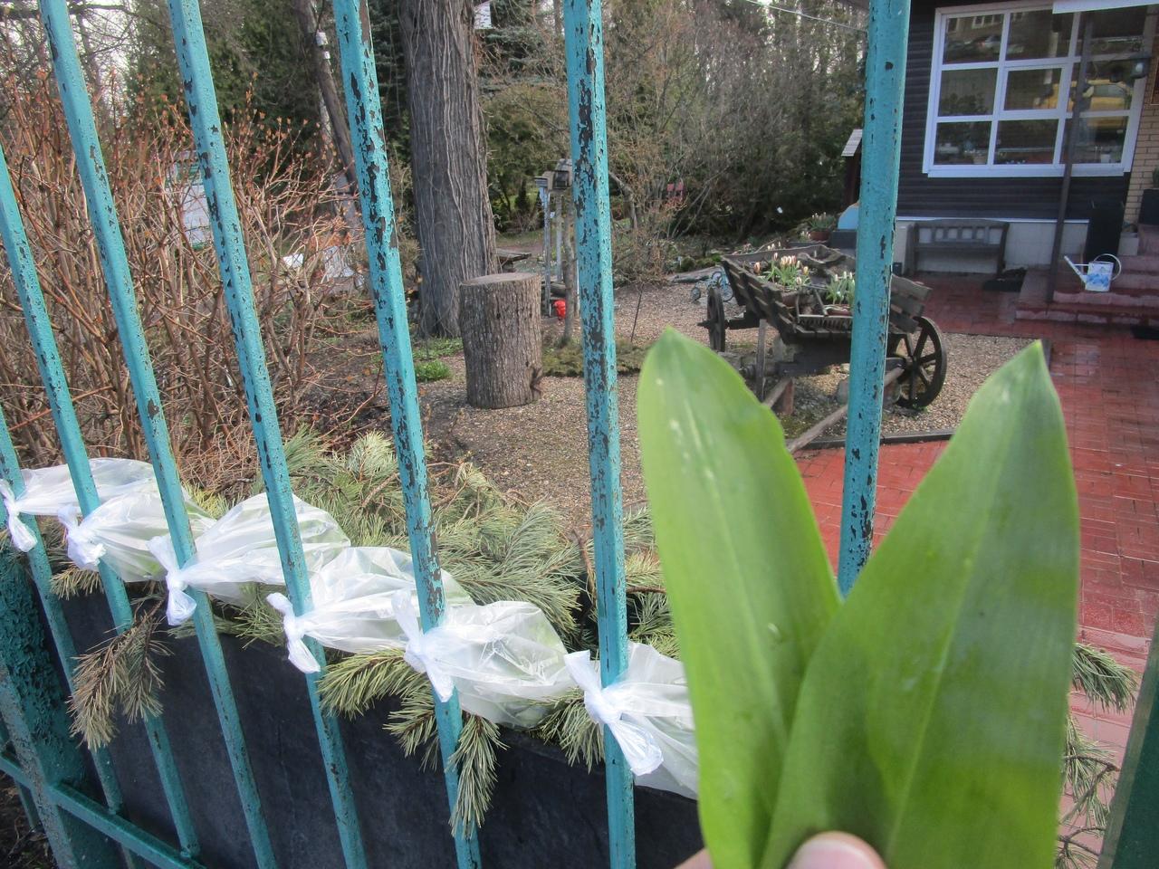 Тверской Ботанический сад дарит жителям Твери витамины