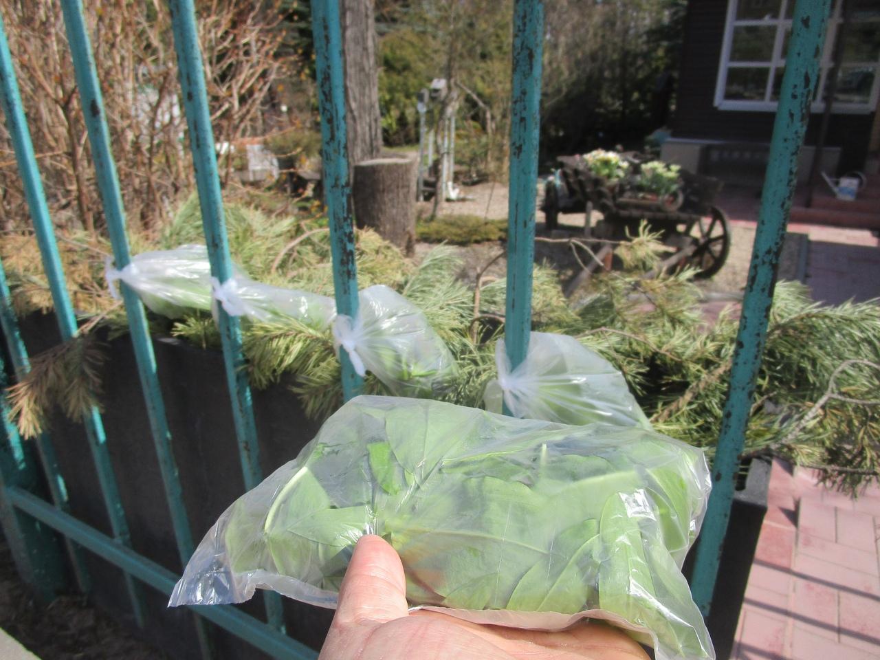 Тверской ботанический сад угощает витаминами
