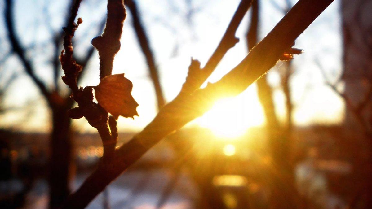 В пятницу природа порадует Тверскую область солнышком