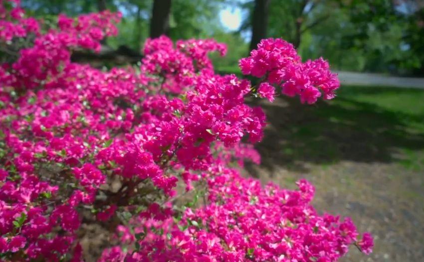 Жителям Твери предлагают совершить виртуальную прогулку по Центральному парку Нью-Йорка