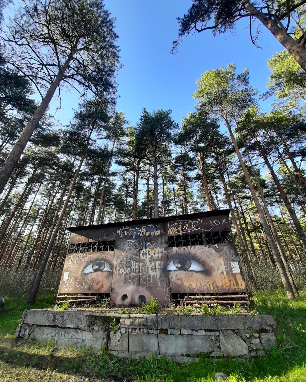 Тверская художница создала новые красивые граффити на заброшках
