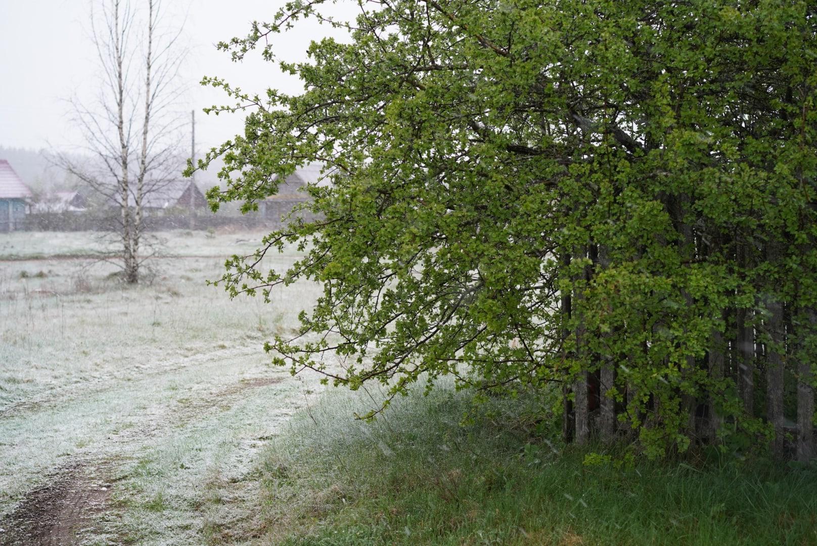 В Тверской области выпал майский снег