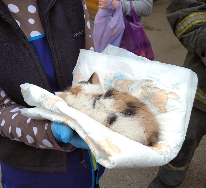Тверские пожарные спасли котенка, попавшего в западню