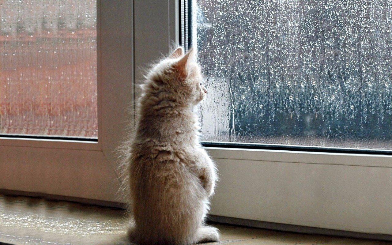 В Тверской области резко похолодает и пойдут дожди