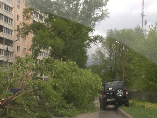 В Твери упавшие дерево мешает проезду транспорта