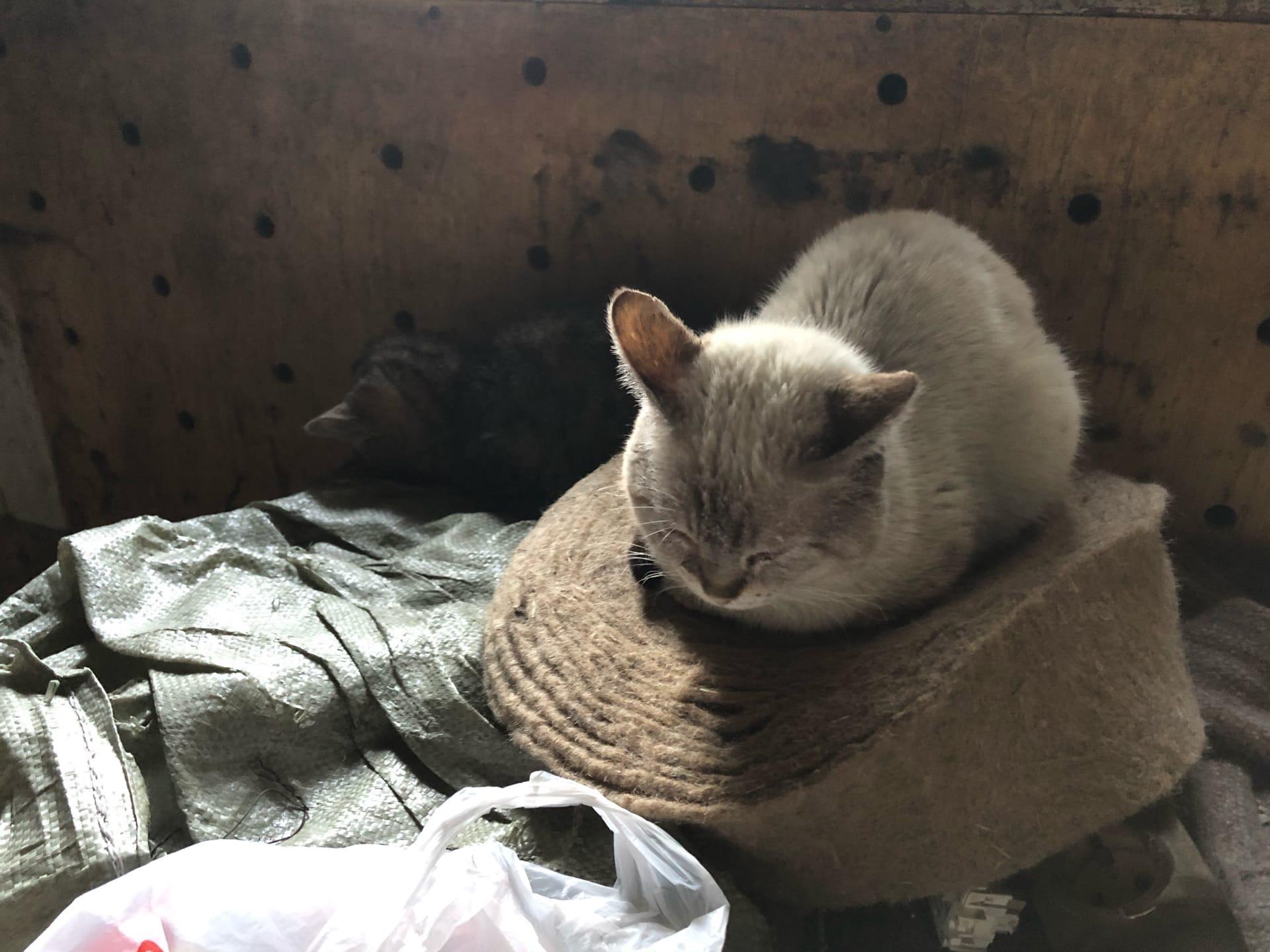 В Твери пожарные спасли 37 кошек от гибели