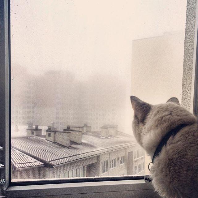 Жителей Тверской области предупредили о тумане