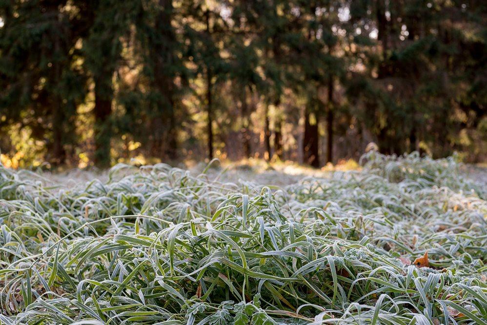 Жителей Тверской области снова предупреждают о заморозках