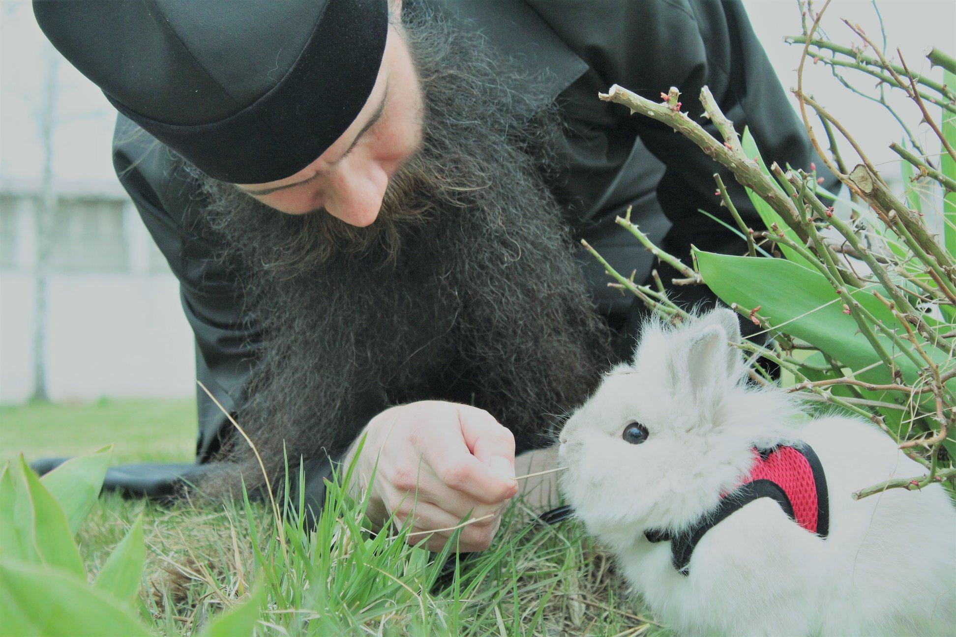 По монастырю в Тверской области гуляет милый кролик