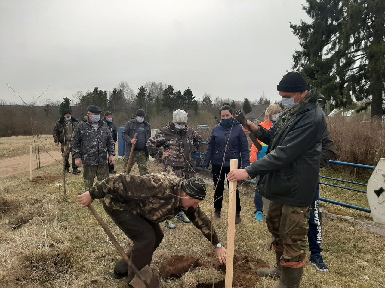 В Тверской области  высажено 6,3 млн деревьев