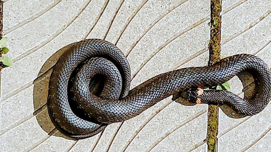 Житель Тверской области заснял на видео, как лягушка пытается спастись из пасти змеи