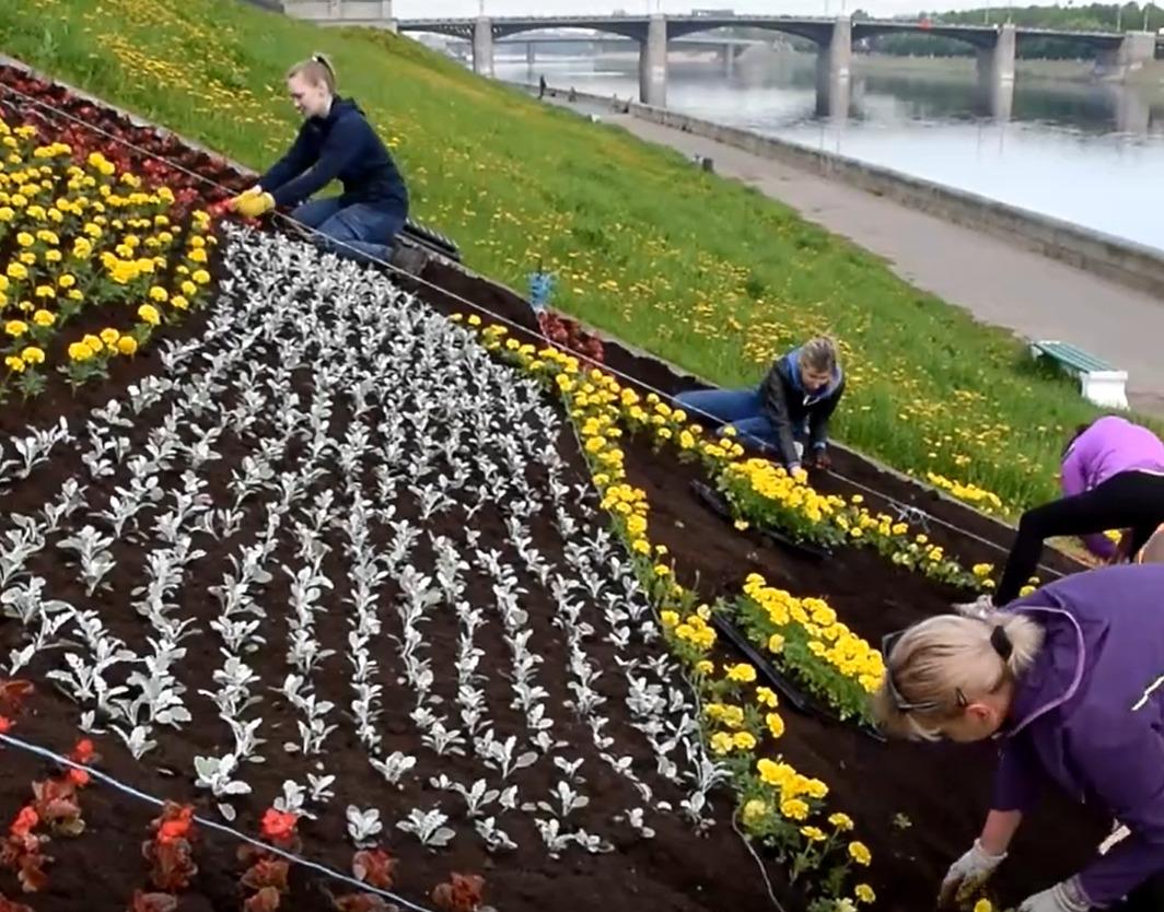 В Твери посадили цветы на гербе города