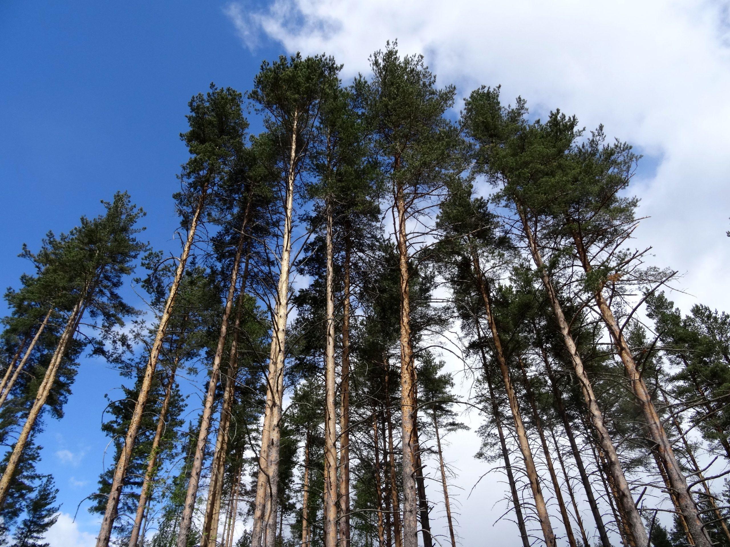В Торопецком районе стало больше лесов
