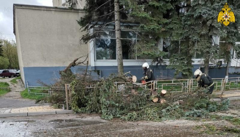 Стихия повалила деревья в Твери