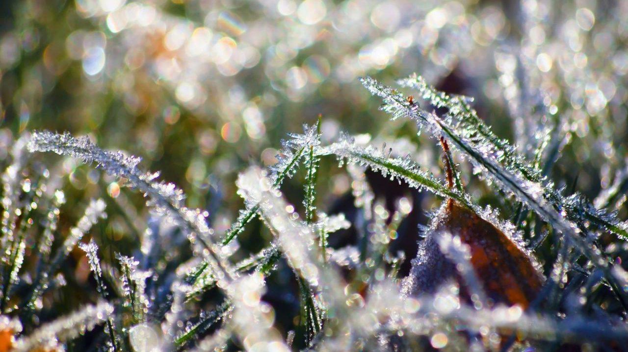 МЧС предупреждает о заморозках в Тверской области