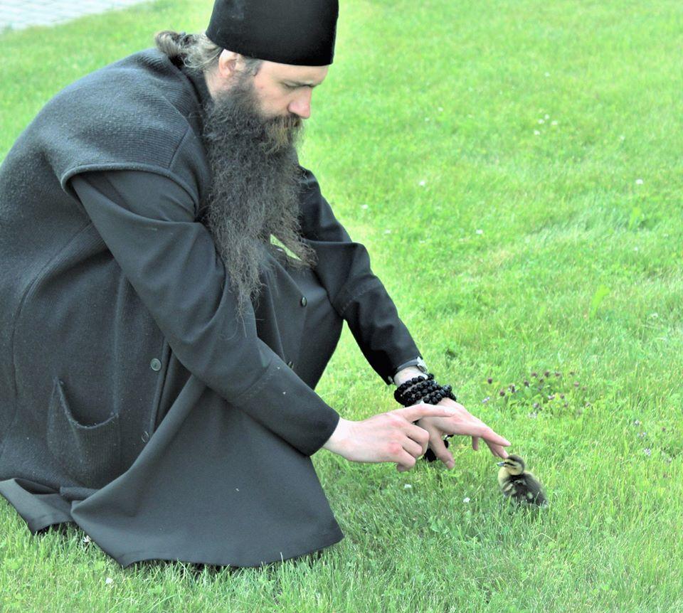 В монастыре Тверской области приютили маленьких утят