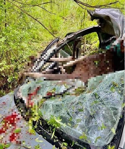 Под Тверью автомобиль сбил лося