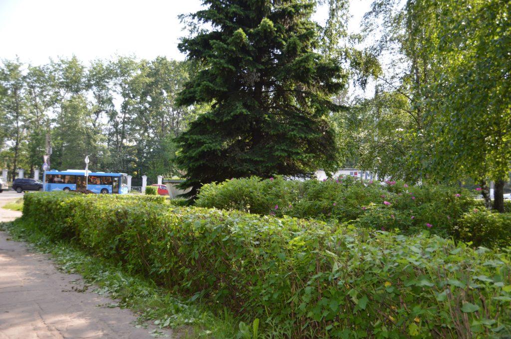 Сезонные работы по благоустройству и озеленению проходят на улицах Твери