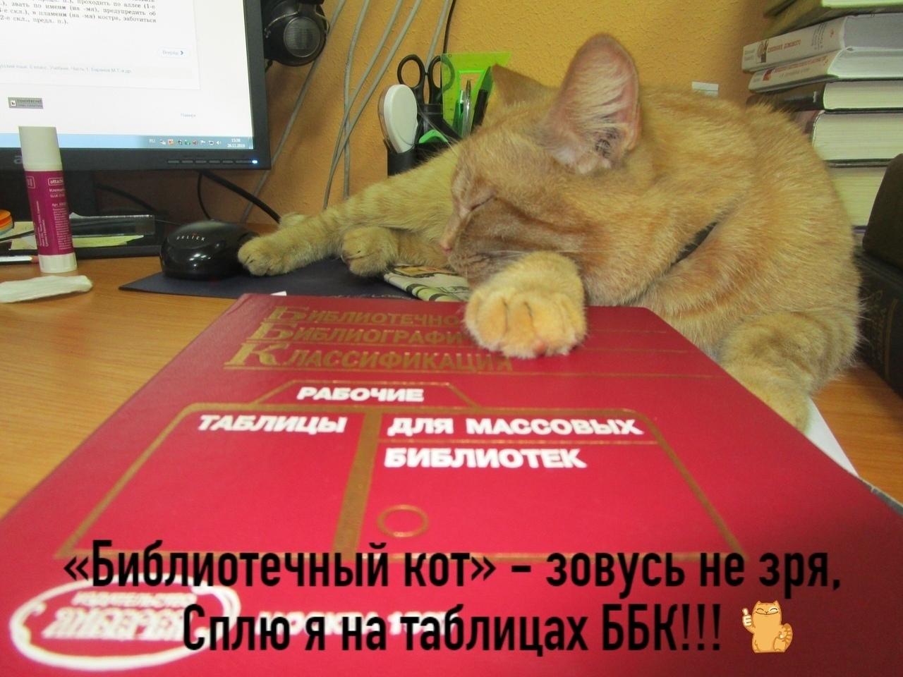 Работающий в библиотеке Тверской области кот Степан просит проголосовать за него