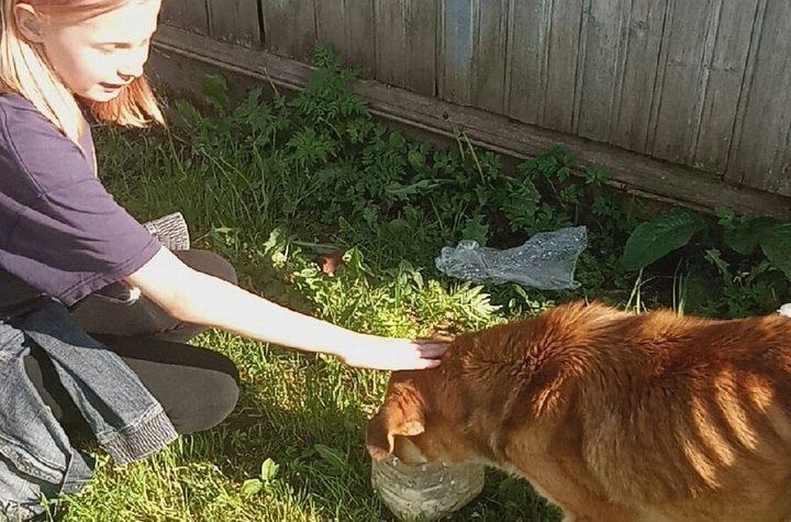 Для истощенной собаки и ее щенят ищут дом в Тверской области