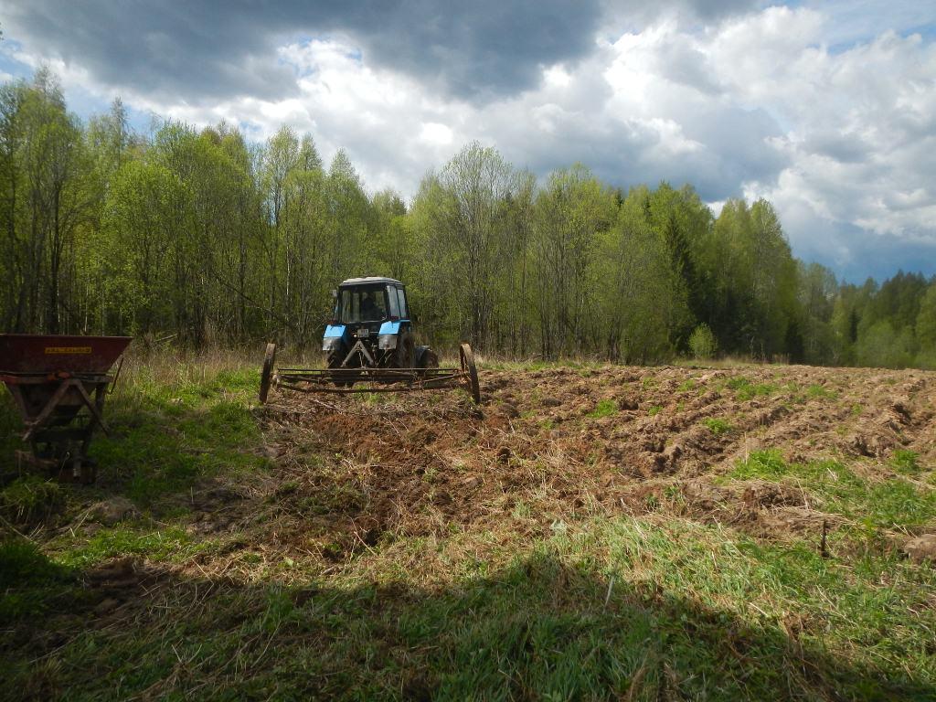 В Тверской области осенью можно будет понаблюдать за медведями и кабанами
