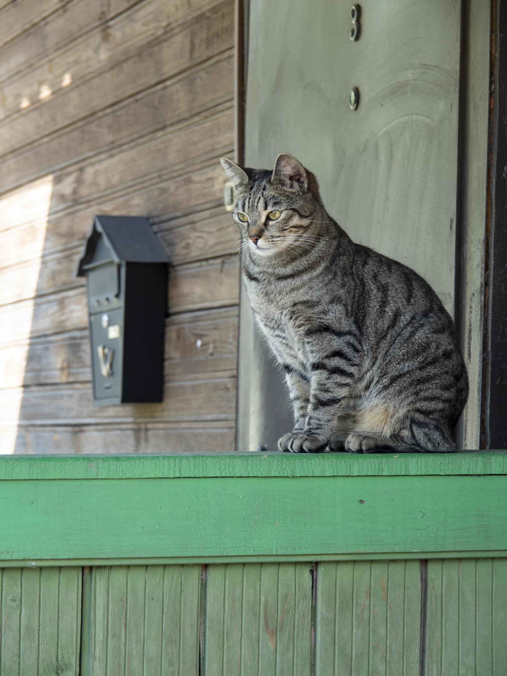 Фотографии котиков из Тверской области набирают популярность в интернете