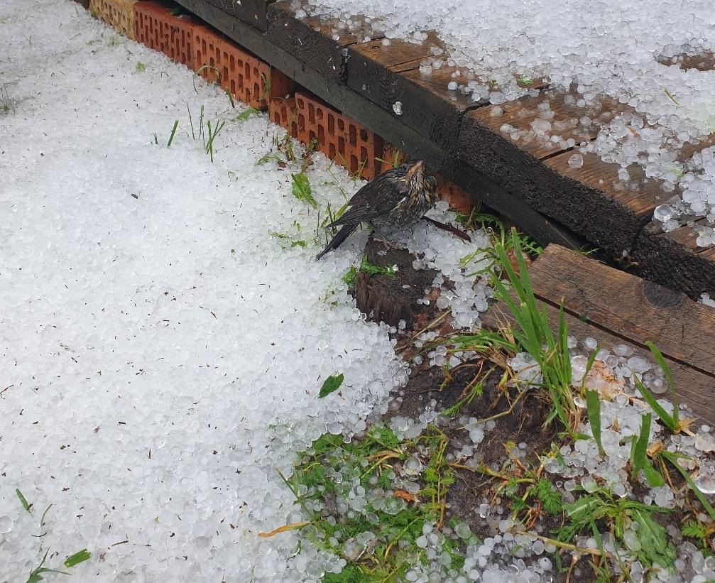 На Рамешки в Тверской области обрушилась мощная гроза и выпал град