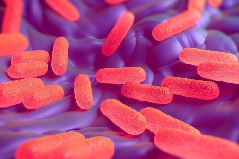 В Тверской области выявили сальмонелл в пищевой продукции