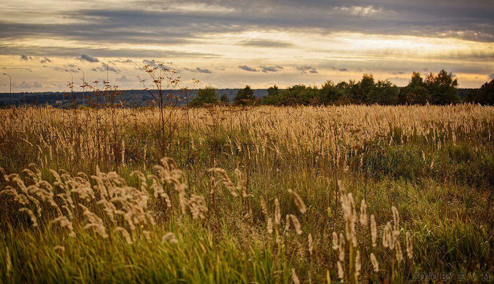 Собственнику земли в Тверской области грозит штраф в 20 тысяч рублей