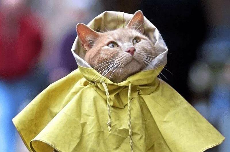На Тверскую область обрушится сильный дождь