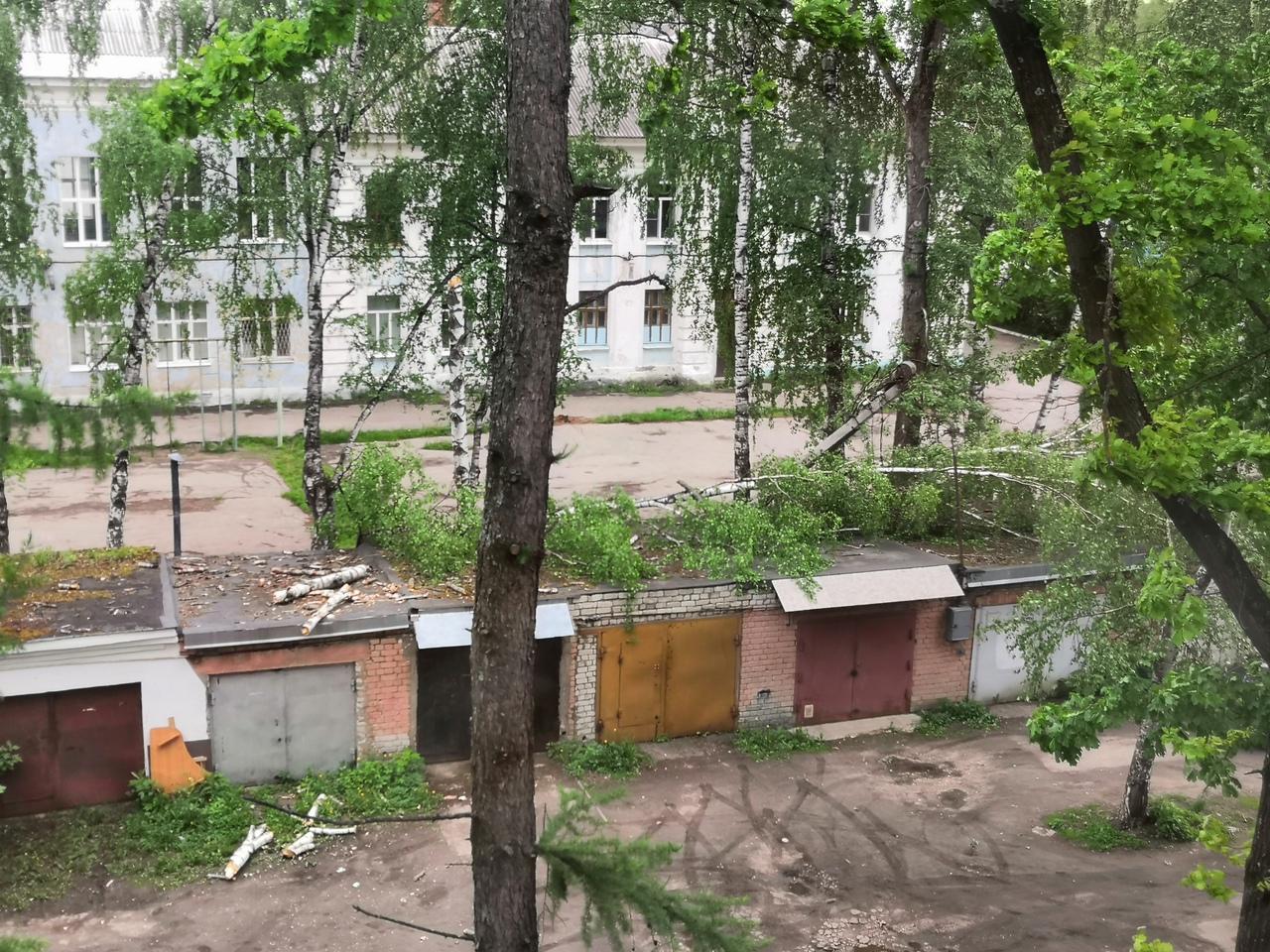 Из-за сильного ветра в Твери падают деревья