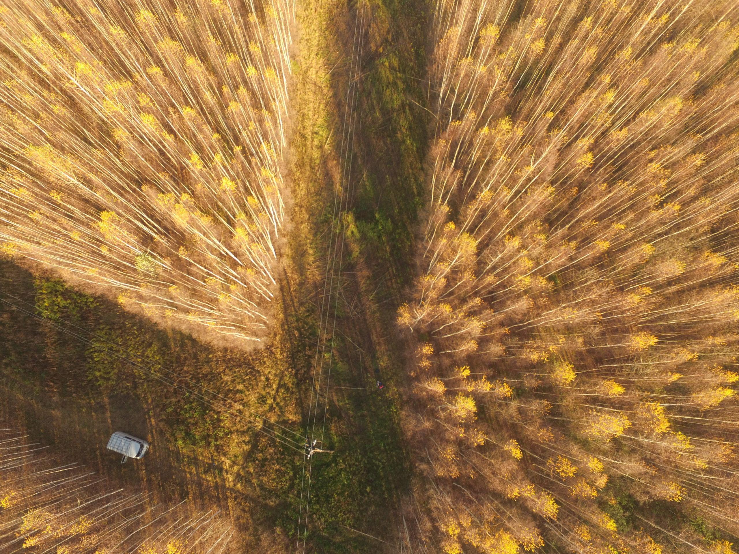Филиал «Россети Центр Тверьэнерго» обезопасил высоковольтные линии в Тверской области