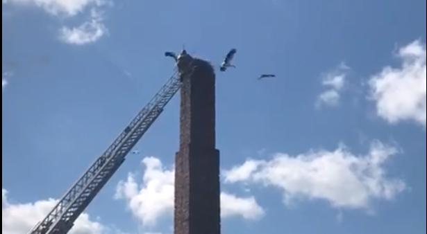 В Тверской области спасатели помогли застрявшему аисту
