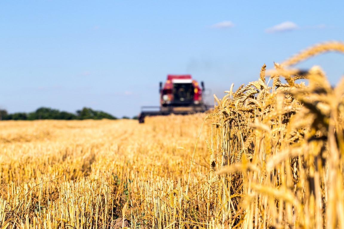 Производители зерна в Тверской области получат финансовую поддержку