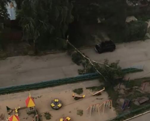 Ветер повалил деревья в Твери