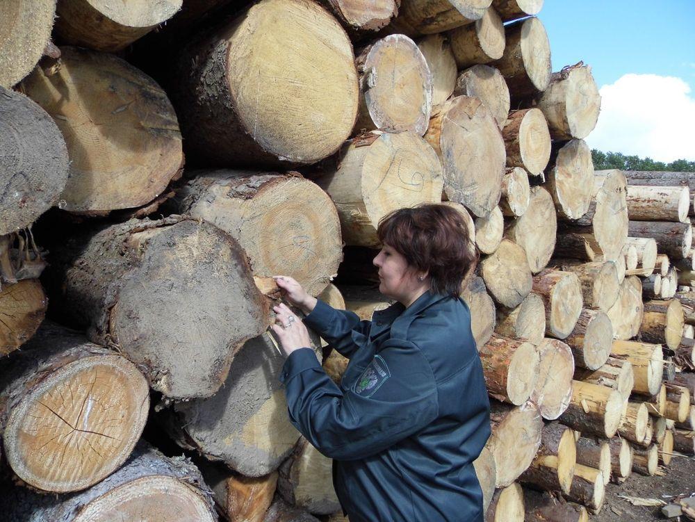 Проведен фитосанитарный мониторинг на лесоперерабатывающем предприятии в Весьегонском районе