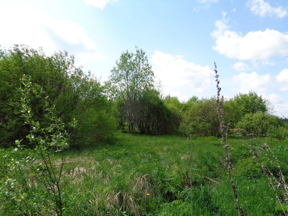 В Тверской области свыше 100 гектаров сельхозземель заросли деревьями и кустарником