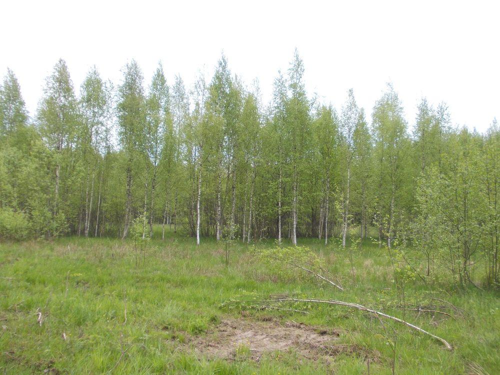 Собственнику одиннадцати заросших земельных участков в Тверской области вынесли предупреждение