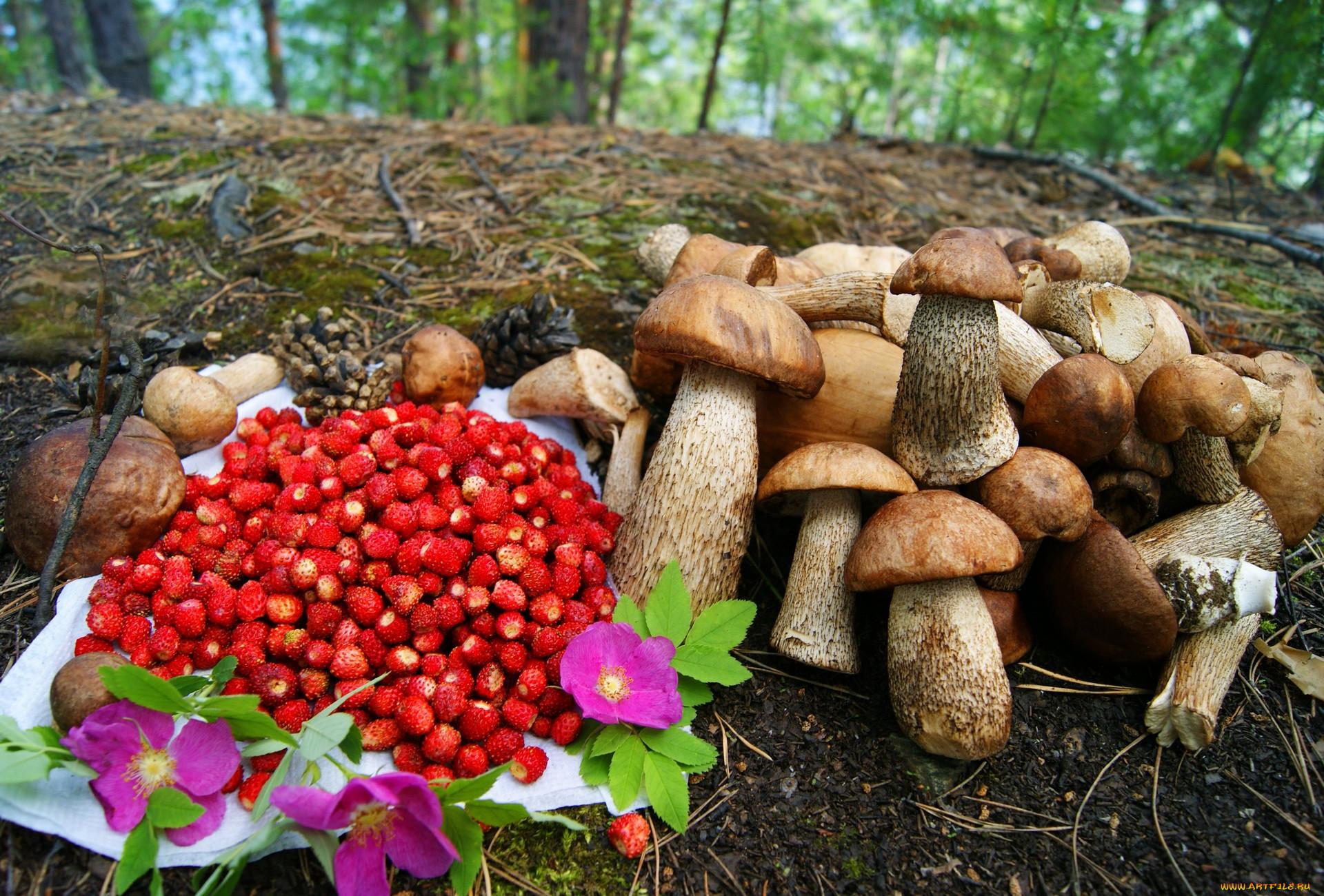 Дары природы: Жители Тверской области отправились в леса и поля за едой