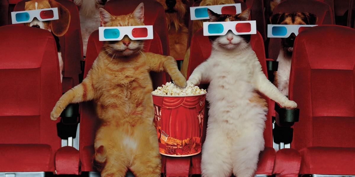 Сходить в кино жители Тверской области смогут уже на следующей неделе