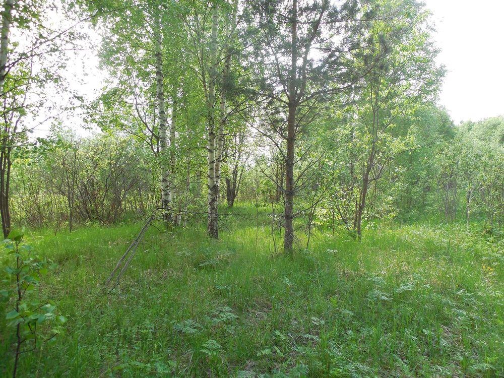 В Торжокском районе земли зарастают березами