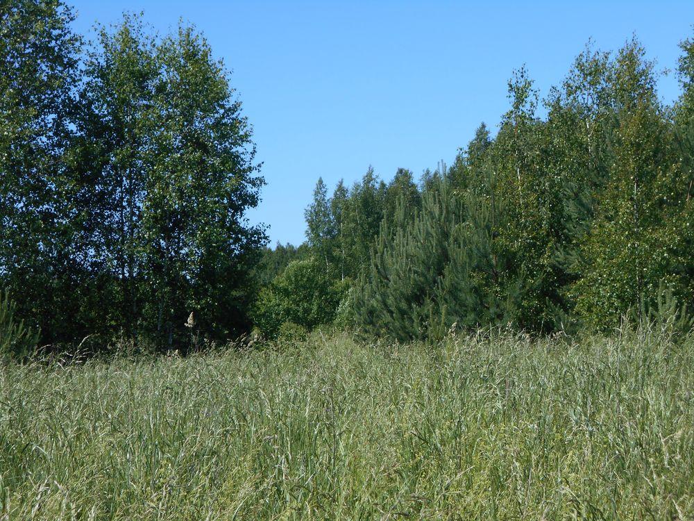 111 гектаров сельскохозяйственных угодий в Тверской области заросли сорняком