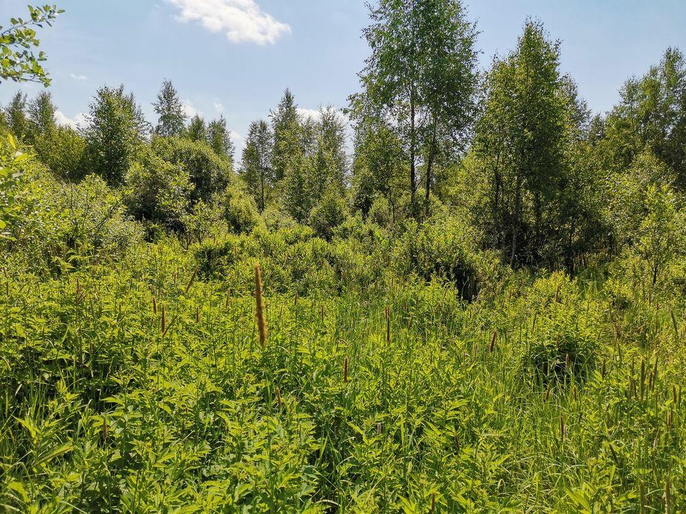 В Вышневолоцком районе продолжают зарастать свыше 30 гектаров сельскохозяйственных угодий