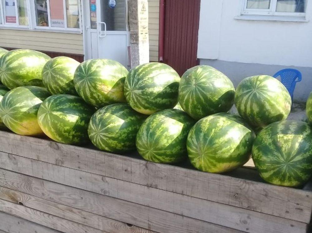 Опасные дыни и арбузы продавали в районе Тверской области