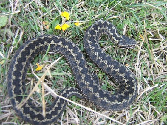 Пять детей из Тверской области попали в больницу с укусом змеи
